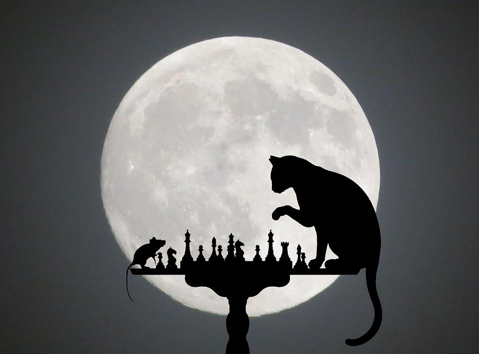 Кот и мышка играют в шахматы при луне