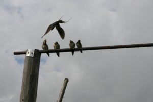 Птицы. Отцы и дети