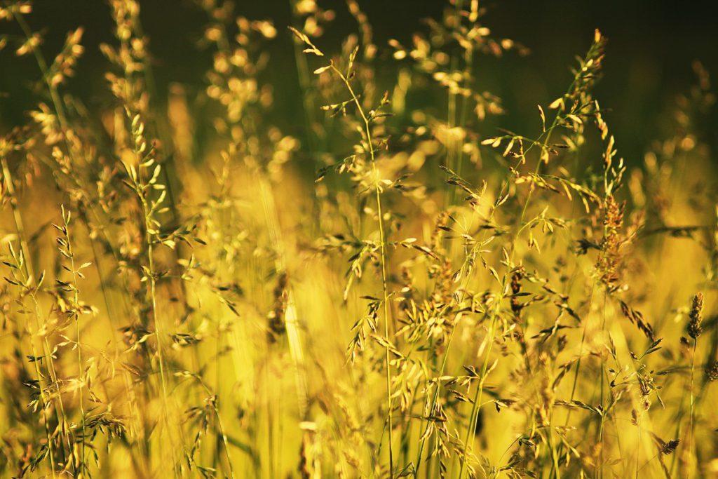 Трава и солнце. Гармония природы
