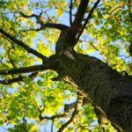 Дерево и небо. Свобода