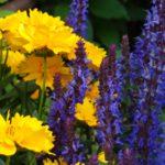 Яркие цветы, фото