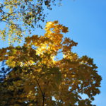 Осень, небо