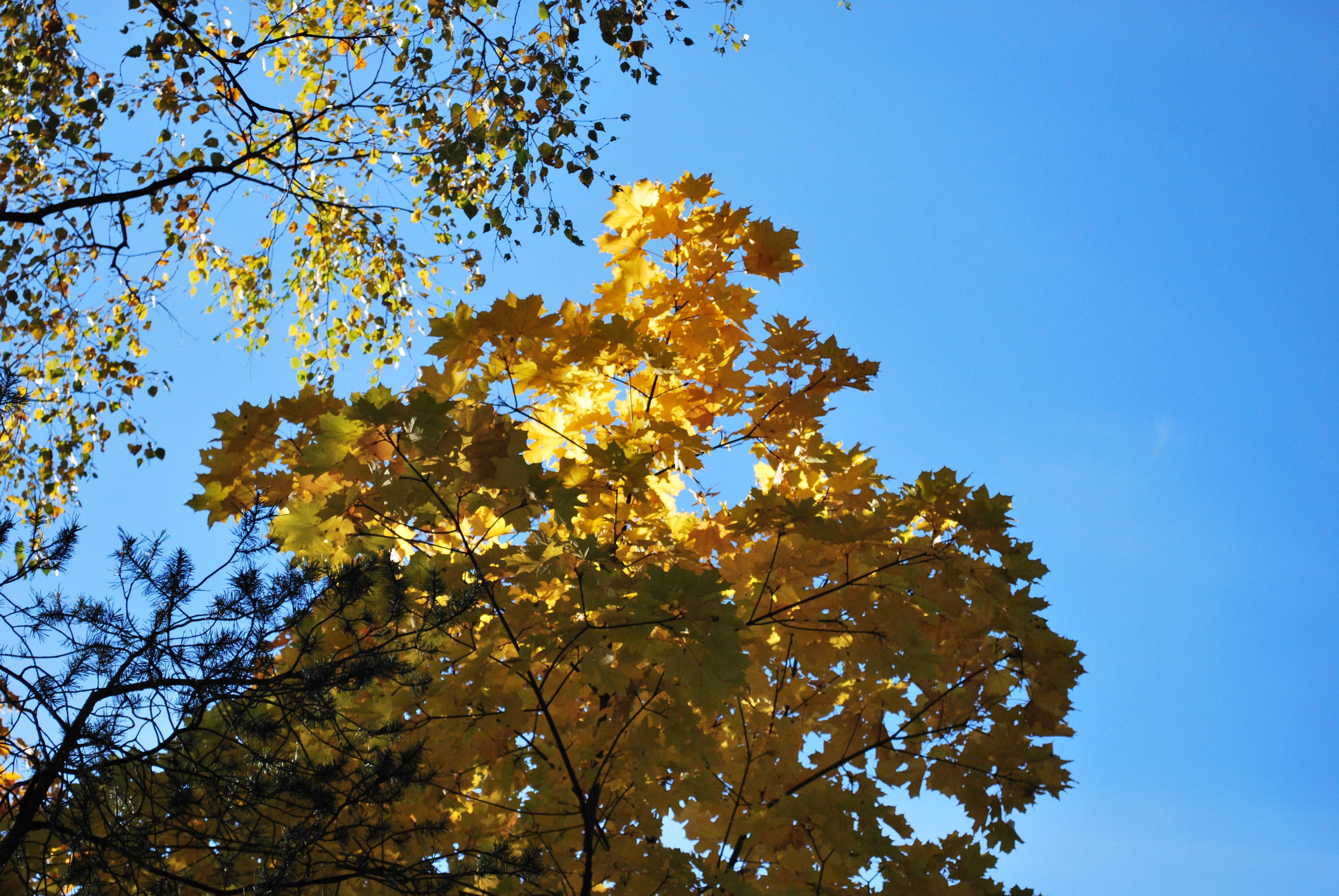 Осенняя несвобода